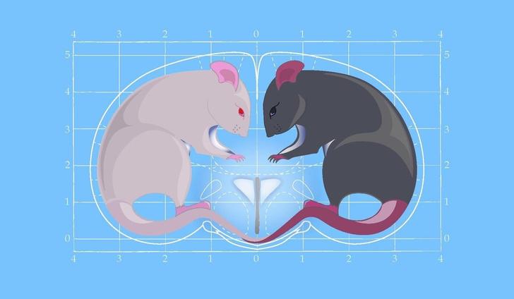 Фото №1 - «Гормон любви» окситоцин может вызывать агрессию