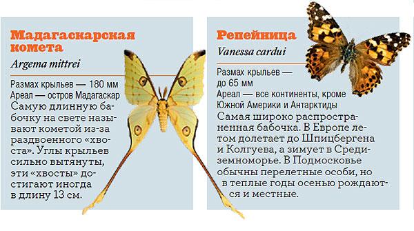 Фото №3 - Жизнь с размахом: энциклопедия бабочек