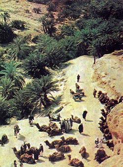 Фото №5 - Дорога среди оазисов
