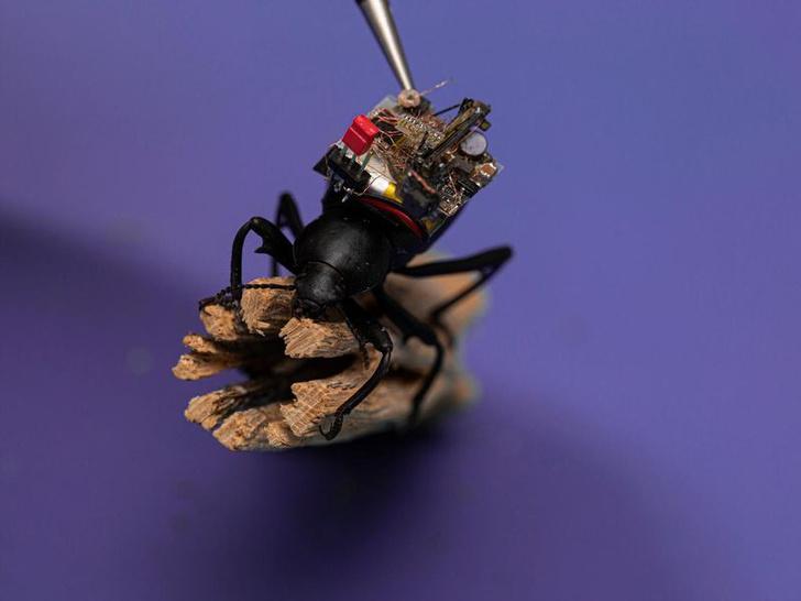 Фото №1 - Американские ученые сделали видеокамеру для жука
