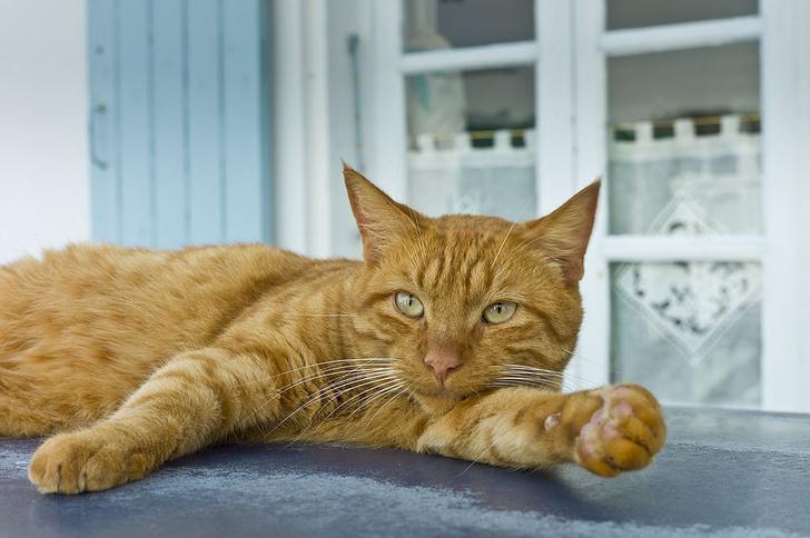 Фото №1 - Как кошки покорили древний мир