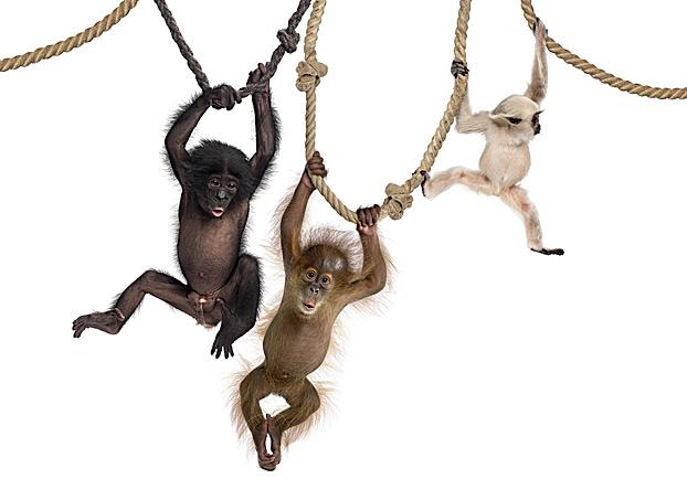 Фото №3 - Припадки кошек, селфи орангутанов и другие новые открытия