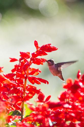 Фото №3 - Вечное лето: 5 долгоцветущих растений для сада