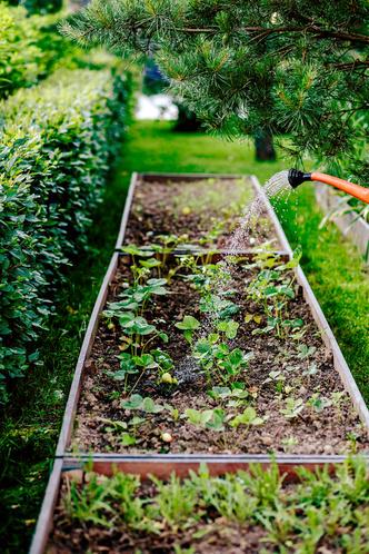 Фото №12 - Сад Миланы Королевой по проекту Татьяны Губской