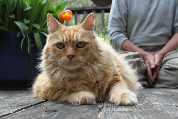 Фото №1 - Ученые обнаружили сходство геномов человека и кота