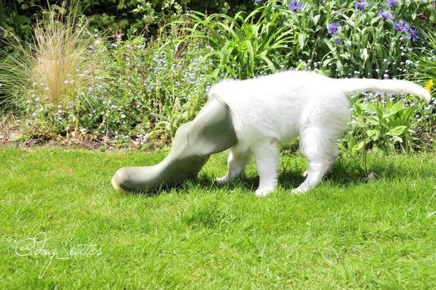 Фото №6 - 13 фото собак, притворяющихся утконосами