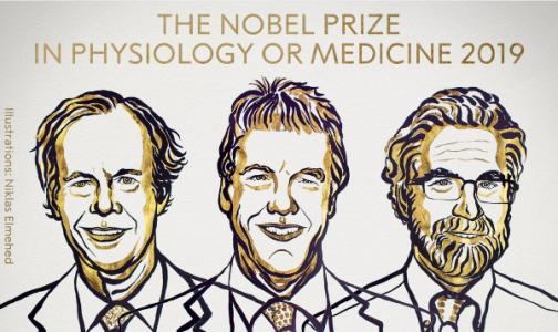 Фото №1 - Нобелевскую премию по медицине получили ученые за исследования реакции клеток на кислород