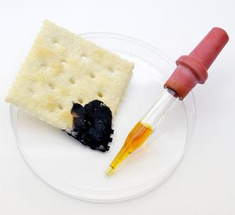 Фото №5 - Опыт: цвет белого хлеба
