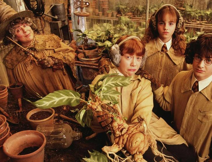 Фото №1 - Как выглядят анчар, мандрагора и другие таинственные растения из книг