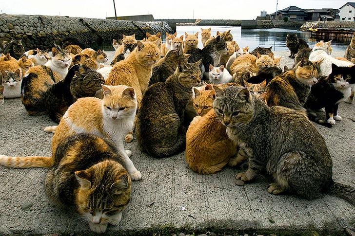 Фото №1 - Кошачья стратегия