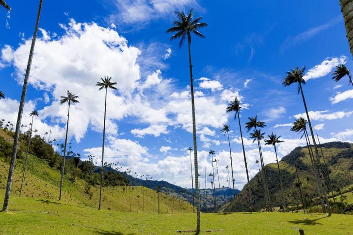 Фото №4 - Маршрут на день: хайкинг в колумбийской долине Кокора
