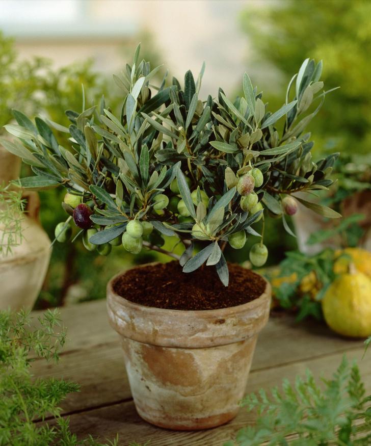 Фото №6 - Зеленый оазис на балконе: 5 растений, которые помогут перенести жару