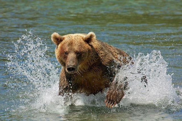 Фото №4 - Медвежья рыбалка. Репортаж cо дна озера
