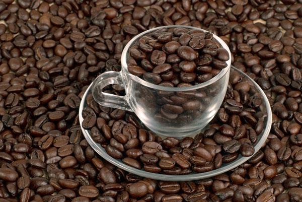 Фото №1 - Долгое знакомство с кофе