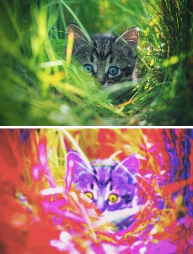Фото №4 - Как видят мир разные животные