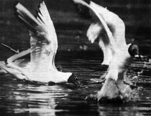 Фото №1 - Вихрь над озером
