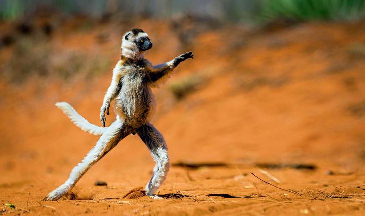 Фото №1 - Один кадр. Мадагаскар