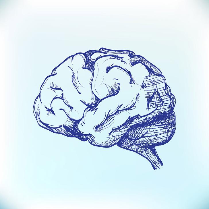 Фото №1 - Откуда появилось утверждение, что человек использует только 10% возможностей своего мозга?