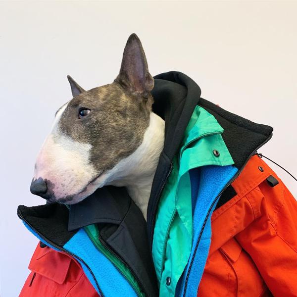 Фото №20 - Домашние животные звезд: собаки, кошки, лемуры, свиньи и даже улитки!