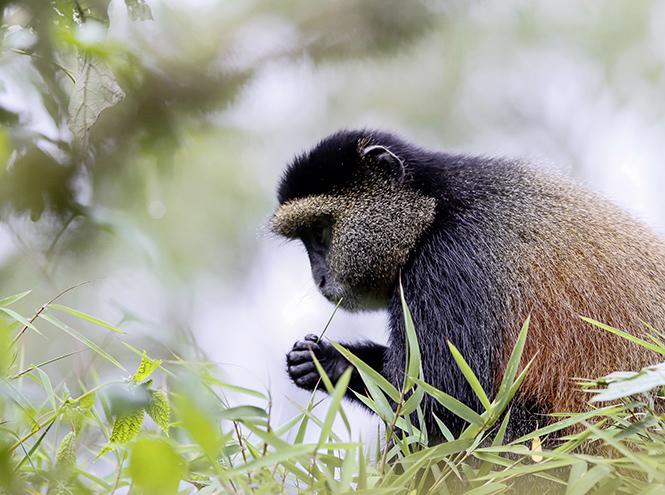 Фото №6 - Руанда: завтрак с гориллами, танцы и другие лекарства