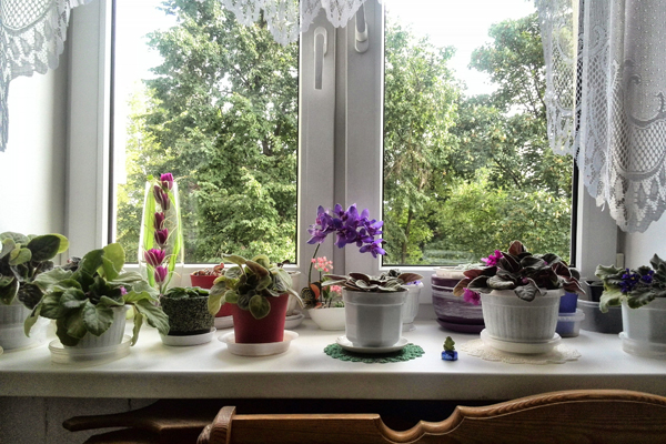 Дом в цветах, фото