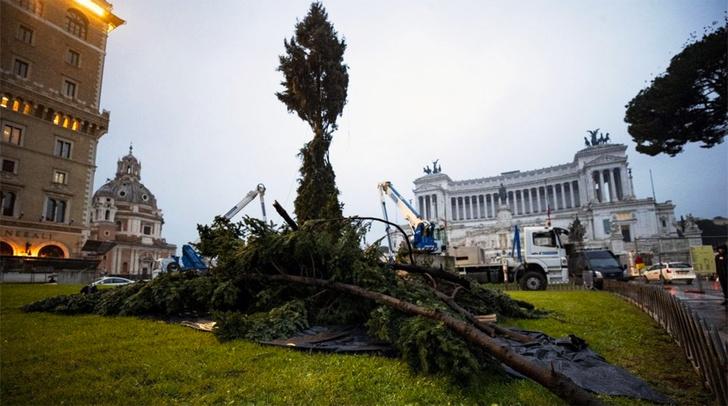 Фото №1 - Жители Рима пожаловались на рождественскую ель
