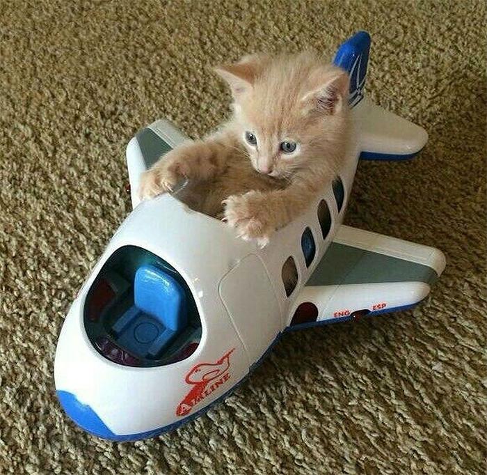 Фото №11 - 20 мемных котов, похожих на известных режиссеров