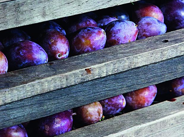 Фото №12 - Черное золото Аквитании: 7 небанальных блюд из слив