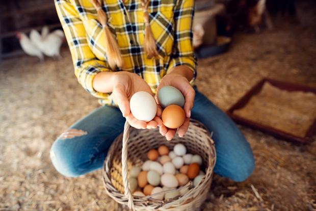 Почему нужно мыть куриные яйца