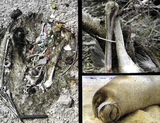 Фото №1 - Ловушки из пластмассы