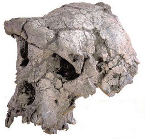 Фото №1 - Прачеловеку исполнилось 7 млн лет