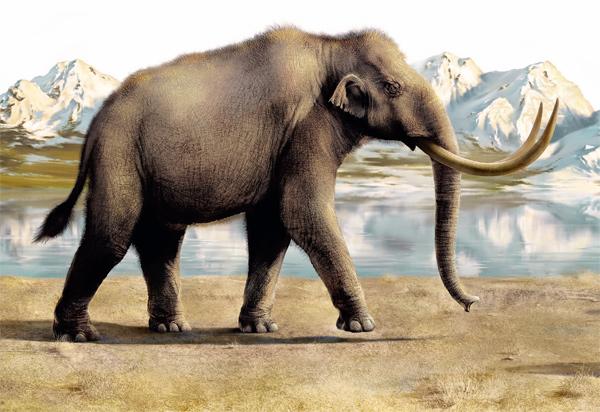 Фото №2 - Когда мамонты не были большими
