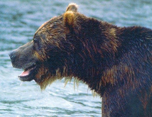 Фото №1 - Медвежья зона