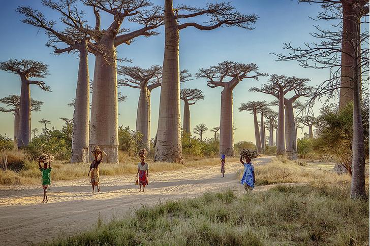 Фото №14 - Распилить поровну: деревня фуа-гра, кирпичи на самогоне и алюминиевая столица Мадагаскара