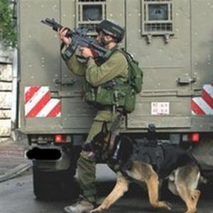 Фото №1 - Израильская армия продала собак