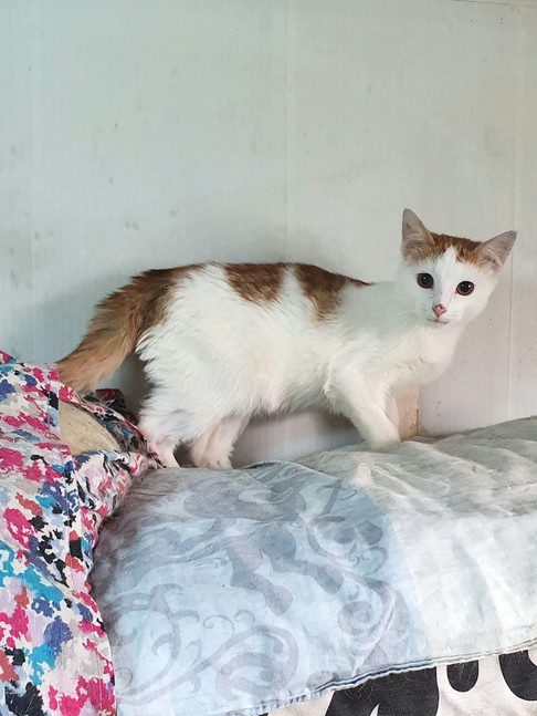 Фото №2 - Котопёс недели: кот Васаби и собака Джуна