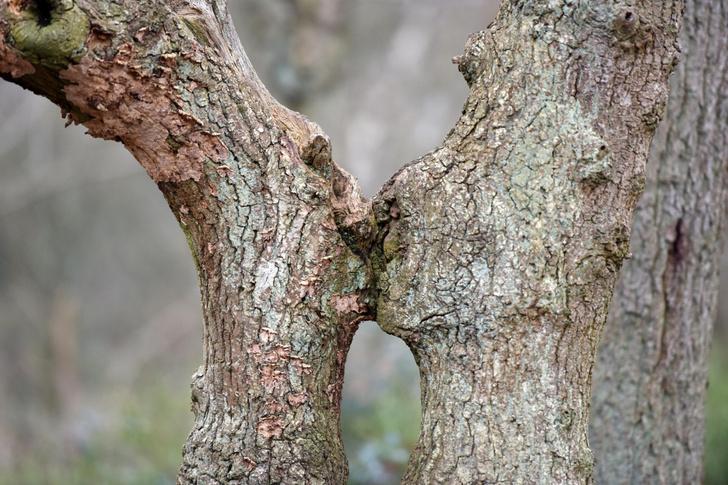 Фото №1 - Поцелуй деревьев