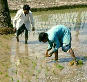 Фото №1 - 140 млн людей на планете пьют воду с мышьяком