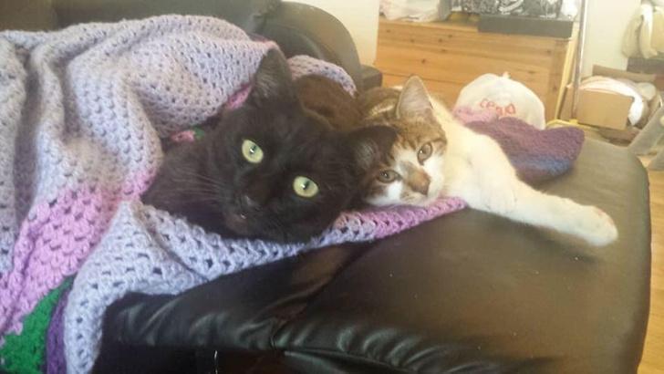 Фото №2 - Женщина поделилась видео с оптической иллюзией: ее покойный кот «материализуется» на диване
