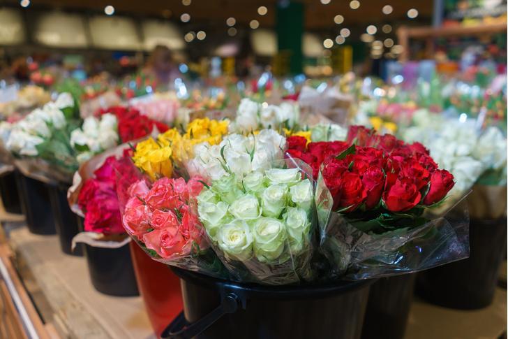 Фото №1 - Родина роз: откуда приехали ваши цветы