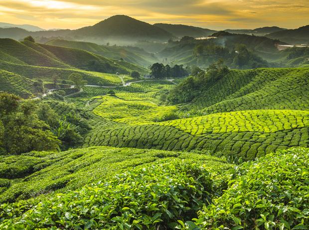 Фото №2 - Как полезный чай становится вредным для здоровья