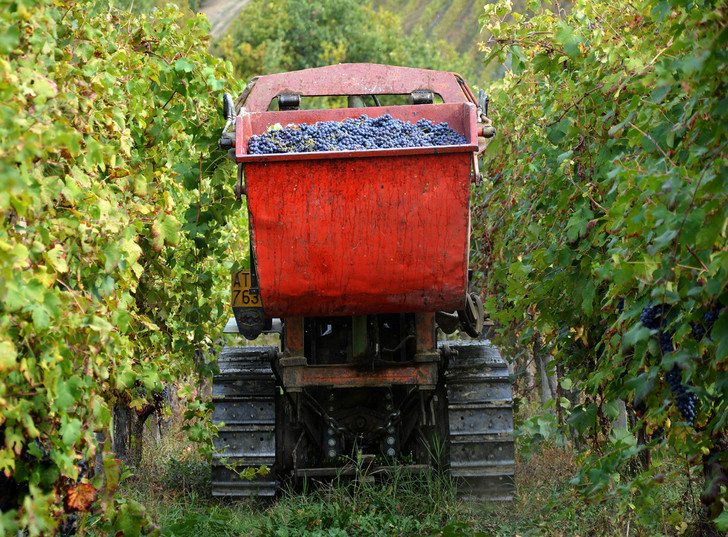 Фото №11 - Соседи по винограднику: борьба Бароло и Барбареско