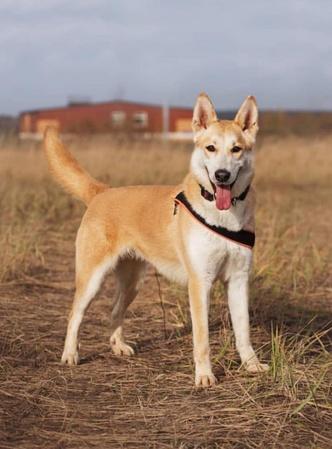 Фото №2 - Котопёс недели: собака Лаки и кошка Мила