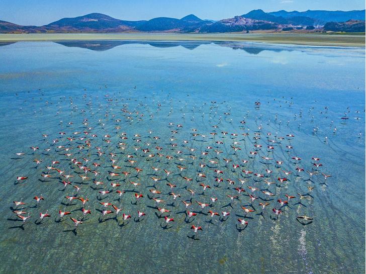 Фото №1 - Фламинго над озером