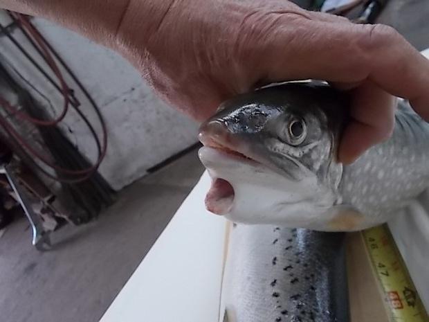 Фото №3 - Жительница Нью-Йорка поймала жуткую рыбу с двумя ртами