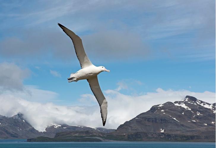 Фото №4 - Кто кого поборет: самые большие живые существа в море, на суше и в воздухе