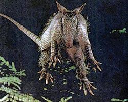 Фото №1 - «Карманные динозавры»