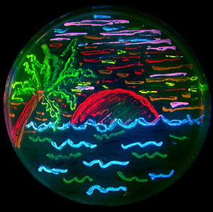 Фото №4 - Медуза — животное с «огоньком»