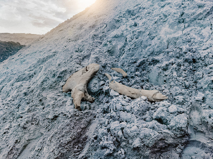 Фото №1 - На Ямале обнаружены останки мамонта