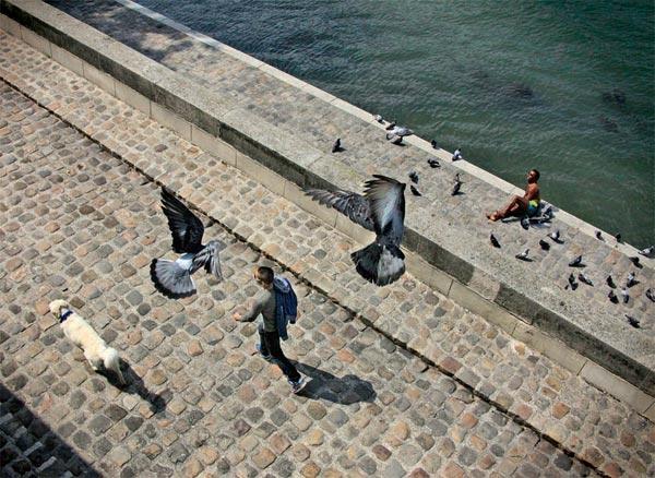 Фото №4 - Собаки на Сене